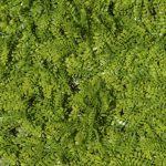 Muro-Verde-Artificial-Follaje-Helecho-Persa-Mexico-Guadalajara-Queretaro