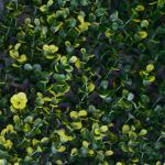 Muros verdes en queretaro Amarillo
